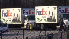 Pandas depart the Toronto Zoo for Calgary