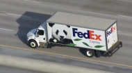 One of three FexEx trucks en route to Pearson International Airport where the Toronto Zoo's pandas will start their trip to Calgary.