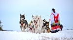 Justin Allen and his sled dogs are shown in handout photo. (Justin Allen/HO/THE CANADIAN PRESS)