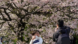 A family takes a picture of cherry blossom flowers at full bloom at Chidorigafuchi in Tokyo, Monday, March 26, 2018. (AP Photo/Shizuo Kambayashi)