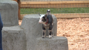 The Beacon Hill Children's Farm is seeking donations to help support its animals during the COVID-19 pandemic: (CTV News)