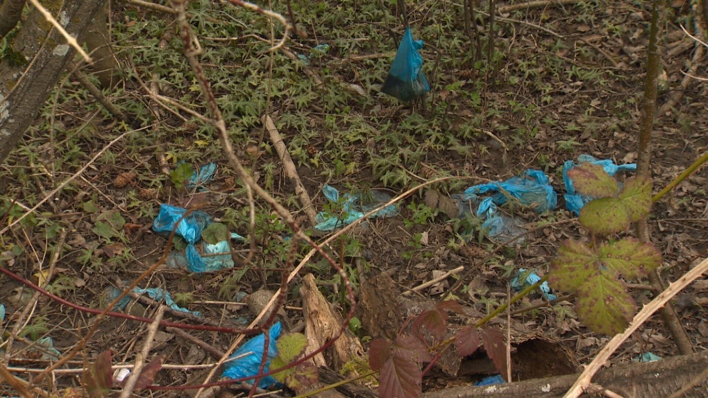 Discarded bags of dog poop