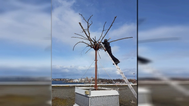 Ogden Point builds fake tree to lure eagles and scare