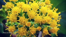 Spring in my 5/6 classroom at St. Edward School in Westport. My students love looking at it and the yellow makes us happy! (Laura Deeves/CTV Viewer)