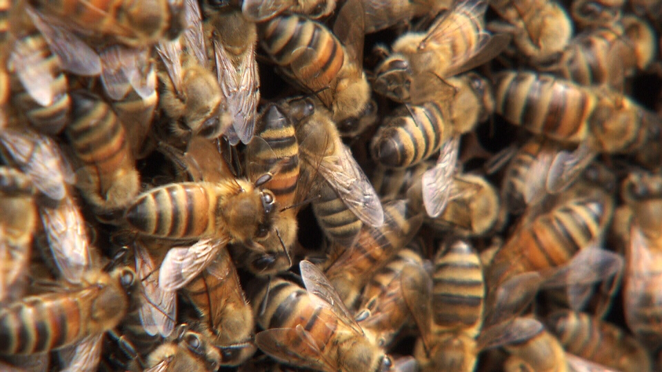 Honeybees are seen on Monday, April 2, 2018.