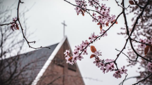 Cherry blossom season is back, and it's sent photographers across the Lower Mainland in search of the perfect picture. Here are some of the images captured by CTV Vancouver's Instagram followers. (@KonnectPhotography)