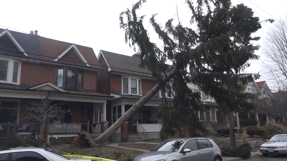 A tree falls down and gets tangled in Hydro wires during the wind storm hitting the GTA.
