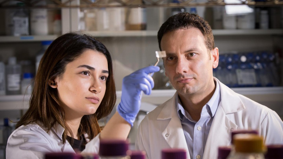 Researchers Hanie Yousefi and Tohid Didar examine a transparent patch, which can be used in packaging to detect pathogens on food. (McMaster University)