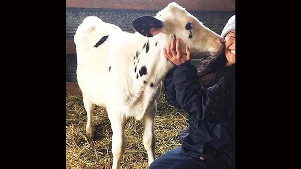 Calve used at Seneca College is pictured with a student. (Photo provided by Jenny McQueen)