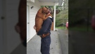 Red, a 10-month-old redbone coonhound, was reunited with his owner James Dumont after the dog was stolen and missing for six months. April 12, 2018. (CTV Vancouver Island)