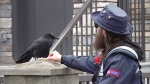 Canuck the crow befriends mail carrier