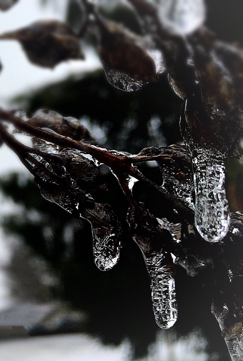 Freezing rain can be seen on everything, including tree branches. (Twitter / @EdPilon)