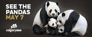 Calgary Zoo Pandas Carousel