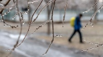 A man walks through a park following freezing rain Monday, April 16, 2018 in Montreal. (Paul Chiasson  / THE CANADIAN PRESS)