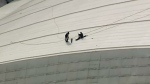 Crews patch up hole in Rogers Centre