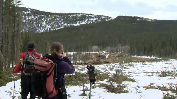 Hikers and conservationists survey an area of southern Kananaskis following the introduction of logging to the area