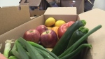 Student run company aims at reducing food waste by delivering imperfect produce to your front door. Fanshawe Broadcast Journalism Intern Laura Galea has the story about a small company hoping to make a big difference