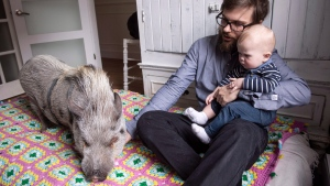 Mario Ramos and his daughter Rose-Elisabeth are seen in the family apartment with their pet pig Babe Thursday, April 19, 2018 in Montreal. THE CANADIAN PRESS/Paul Chiasson