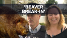 RCMP finds beaver after mother reports B&E