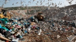 In this Wednesday, Feb. 2, 2018 file photo, earthmovers push mountains of garbage as seagulls fly over the country's largest landfill at Fyli on the outskirts of Athens. (AP Photo/Thanassis Stavrakis)