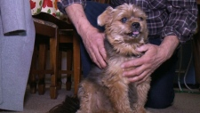 Dog helps save owner's life