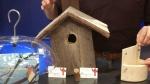 Creating a habitat for birds