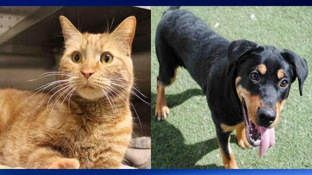 Animals up for adoption - City of Calgary