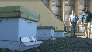 Nanaimo introduces urban bee farms