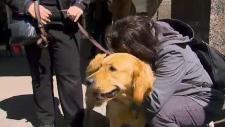 Therapy dogs comfort those impact by van attack