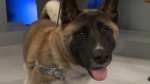 Pet of the Week: Huckleberry the Dog