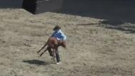 SPCA criticizes St-Tite rodeo