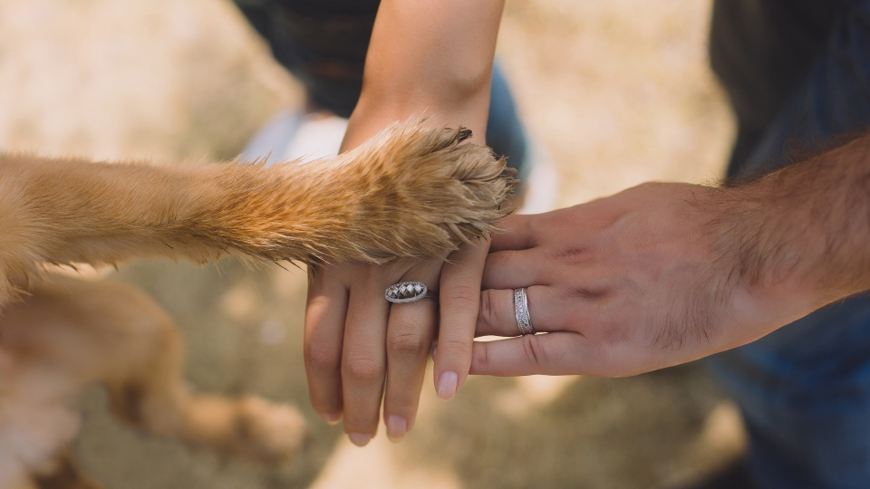 When couples split, who gets the dog? So far, it's the person who paid for it.