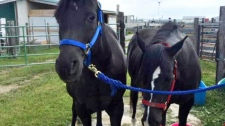 Owner says her two horses were sold