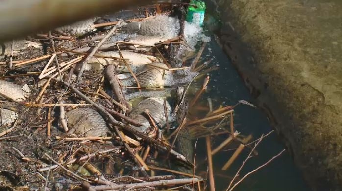 Dead fish are washing up from Wascana Creek in the spring melt