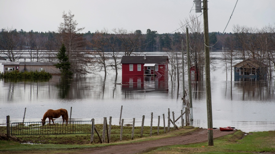 Homes and cottages are surrounded by floodwater as a horse feeds on a farm near Lakeville Corner, N.B. on Wednesday, May 2, 2018. (THE CANADIAN PRESS/Darren Calabrese)