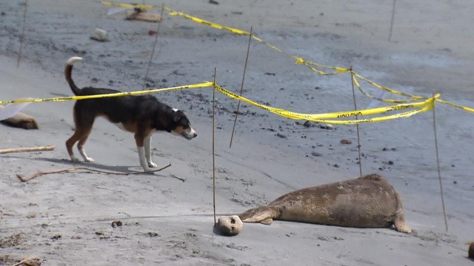 dog seal beach