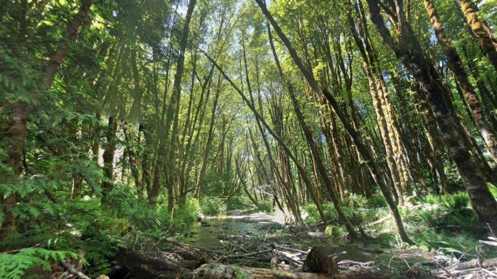 koksilah river provincial park