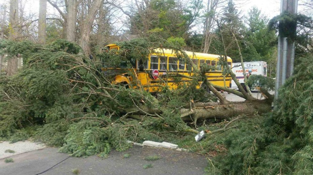 A tree fell perilously close to a bus full of children in the Clarkson area of Mississauga on May 4, 2018. (PRP)