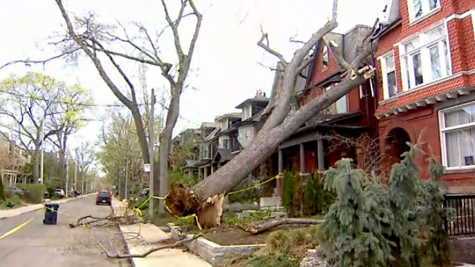 A Toronto family says they've been unable to go inside their home for more than two days after a tree collapsed on it during a May wind storm.