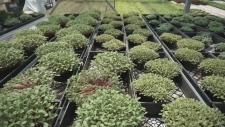 Fields to Forks: Organic Farming
