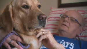 Daisy, a service dog at Simcoe Hospice in Barrie, Ont., provides comfort to patients and their loved ones.