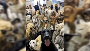 In what appears to be a selfie snapped by a dog, a group of canines at an Ohio dog daycare gathers for a friendly photograph. (Source: Facebook, Go Fetch Dog Daycare and Boarding)