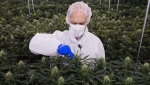 Neil Closner, MedReleaf, chief executive officer poses for photographs at the growing facility in Markham, Ont., on Thursday, January 7, 2016. (THE CANADIAN PRESS/Nathan Denette)