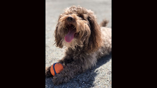 Charlie was in a car that was stolen on May 13, 2018. He is seen here playing ball in the park. (Photo provided by Daniel Borok)