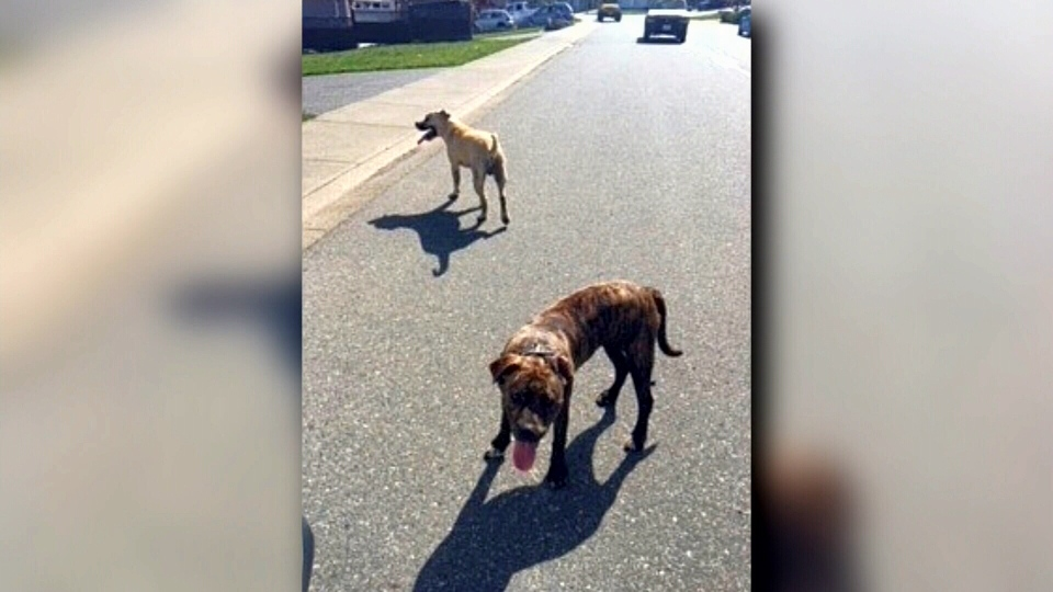 Neighbours said this was not the first time the dogs have been reported to authorities.