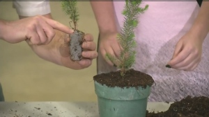 How to plant the perfect tree seedling