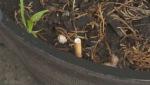Cigarette in flower pot