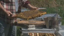 Stephen Crawford with some of the bees from Three Acres.