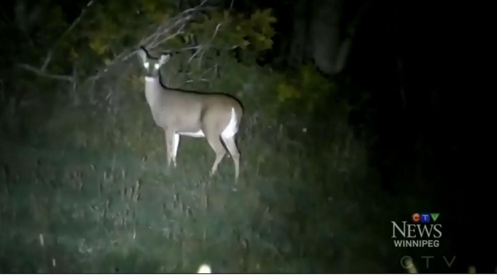 Night hunting ban