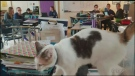 Sawatsky Sign-Off- Cat in the Classroom